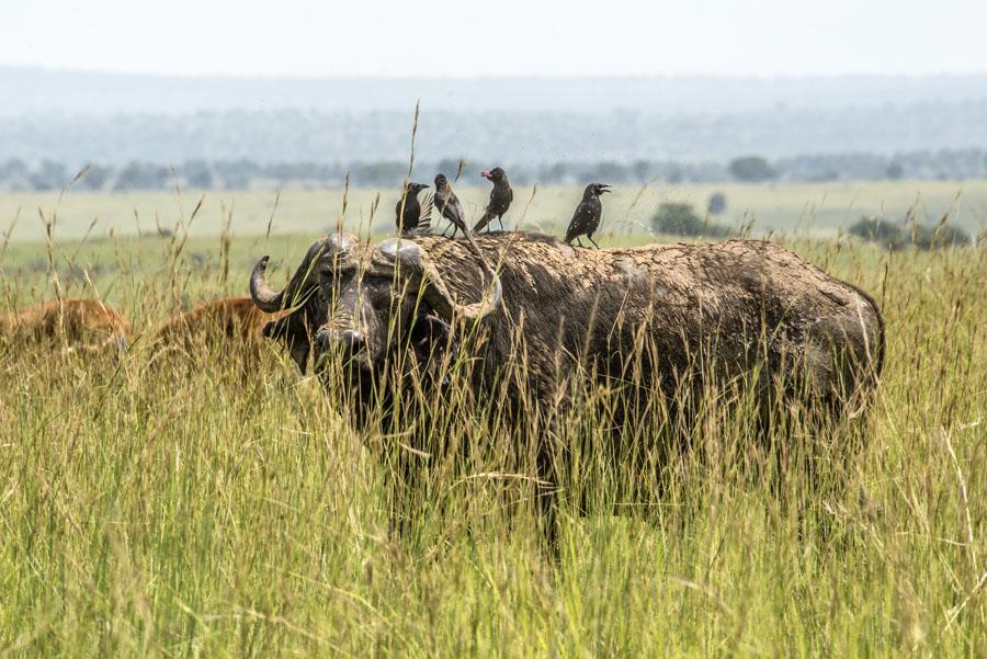 murchison-falls-uganda (207)