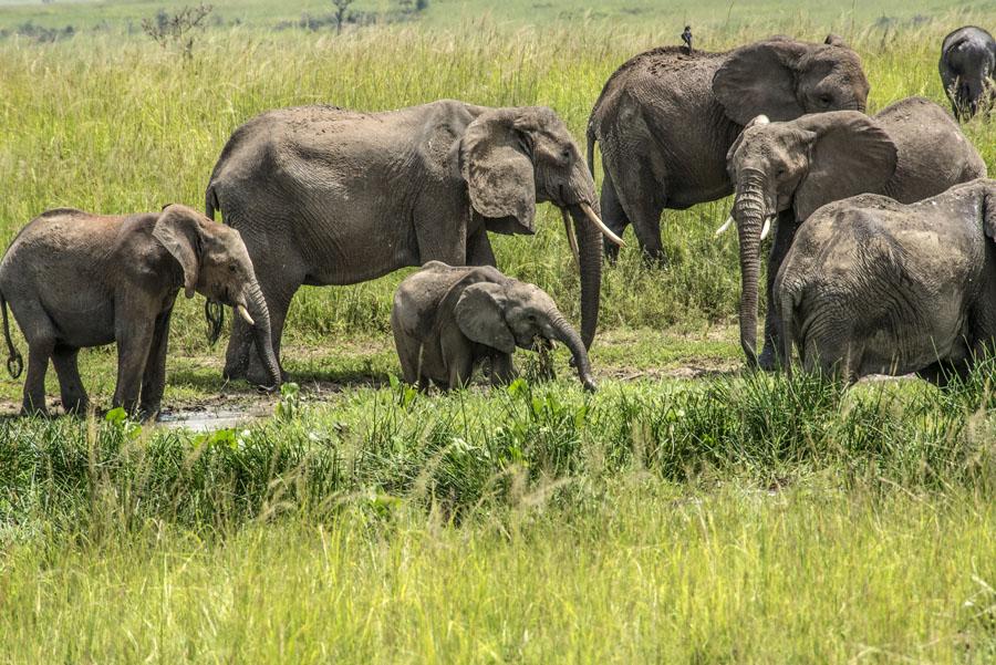 murchison-falls-uganda (208)