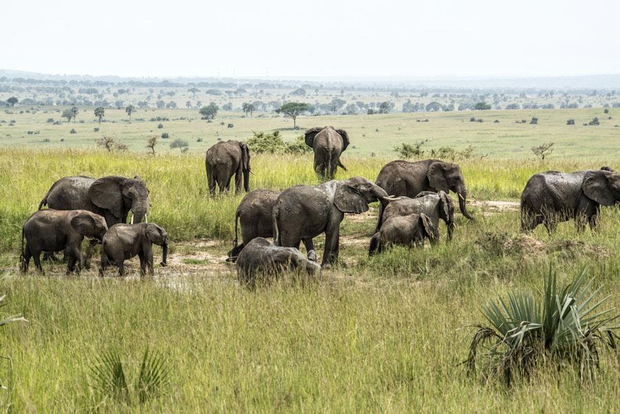 murchison-falls-uganda (209)