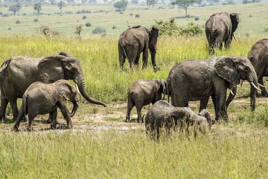 murchison-falls-uganda (210)