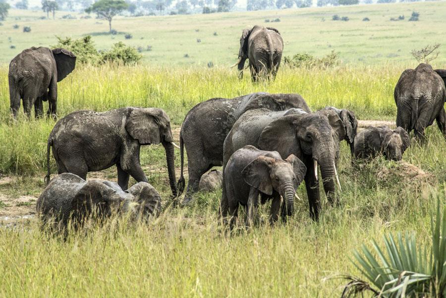 murchison-falls-uganda (211)