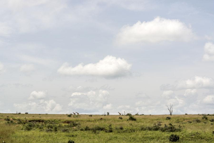 murchison-falls-uganda (214)