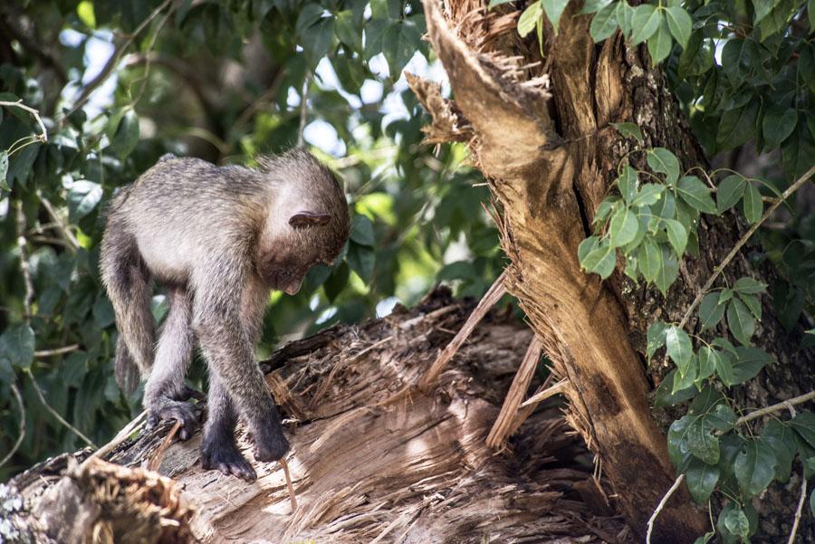 murchison-falls-uganda (219)