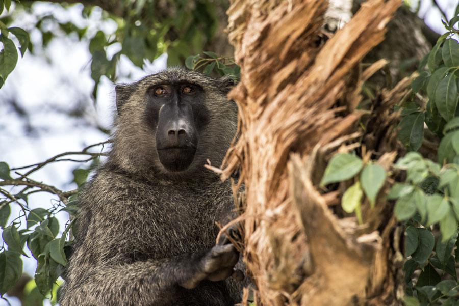 murchison-falls-uganda (220)