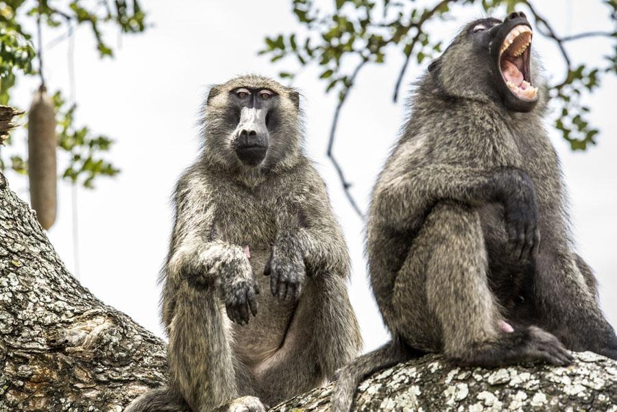 murchison-falls-uganda (223)