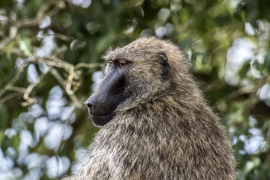 murchison-falls-uganda (226)