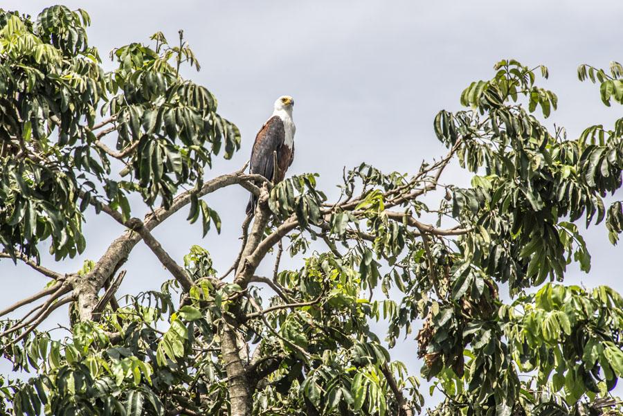 murchison-falls-uganda (228)