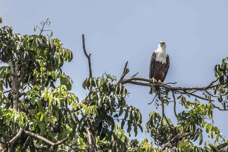 murchison-falls-uganda (229)