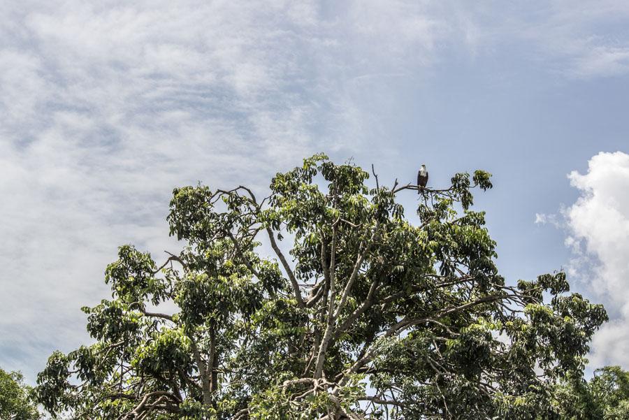 murchison-falls-uganda (230)