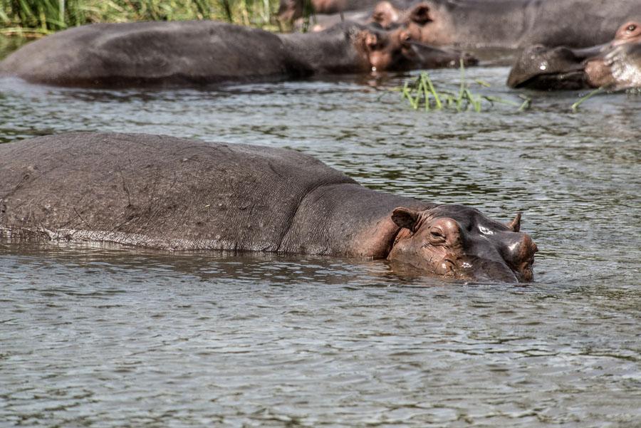 murchison-falls-uganda (237)