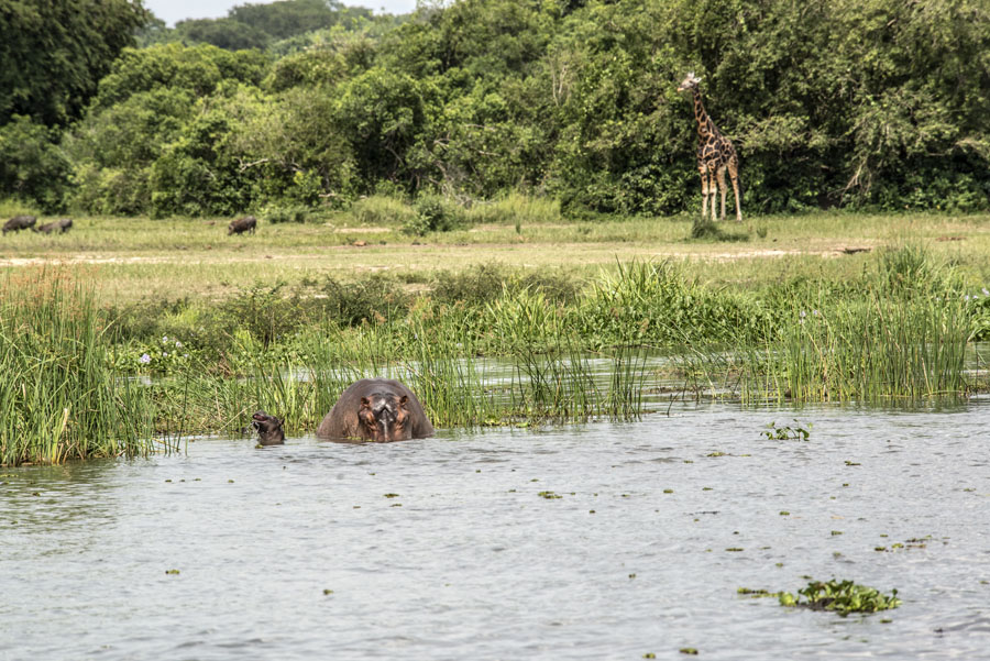 murchison-falls-uganda (243)