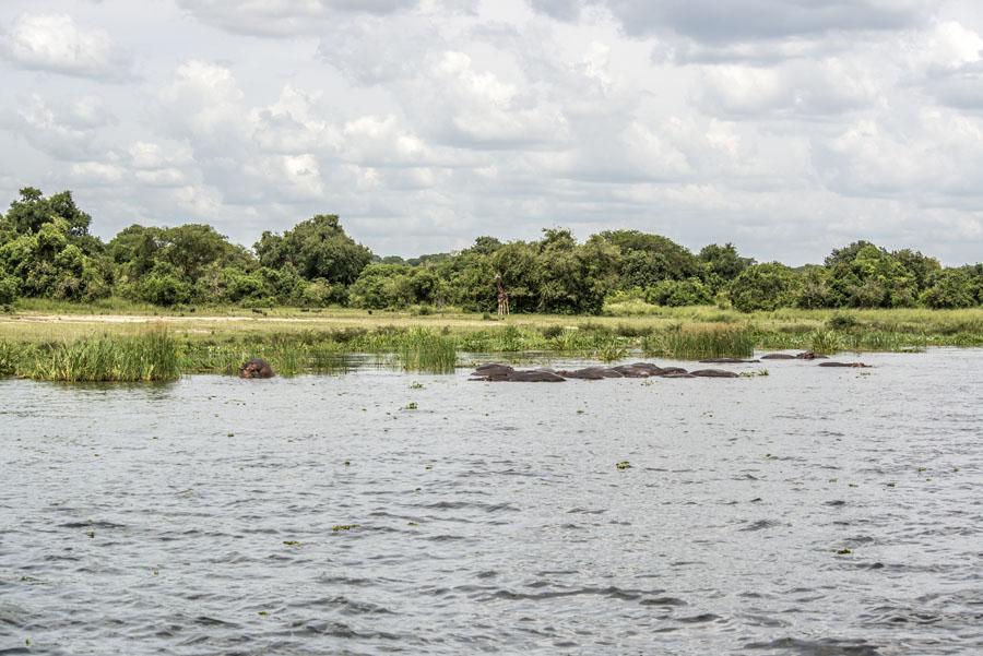 murchison-falls-uganda (244)