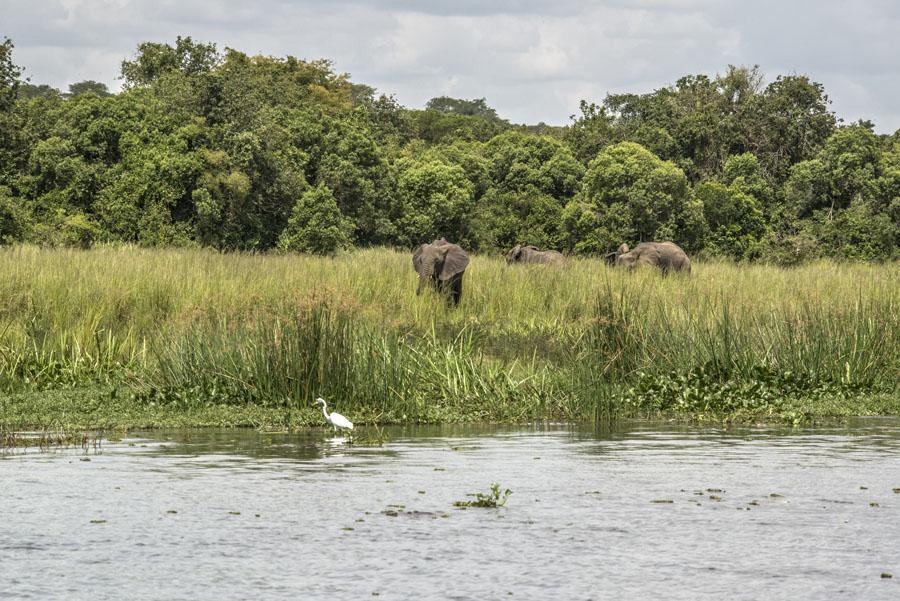 murchison-falls-uganda (246)