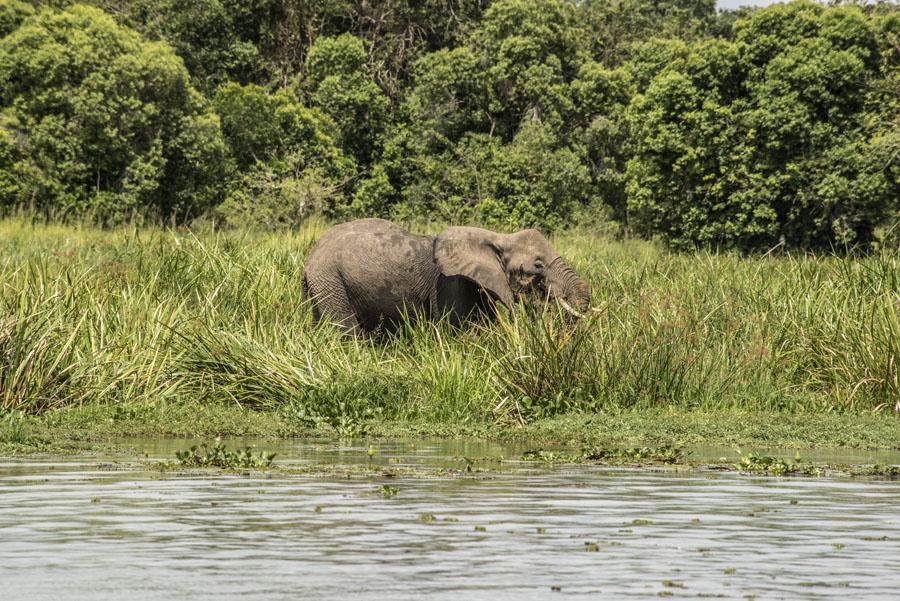 murchison-falls-uganda (248)