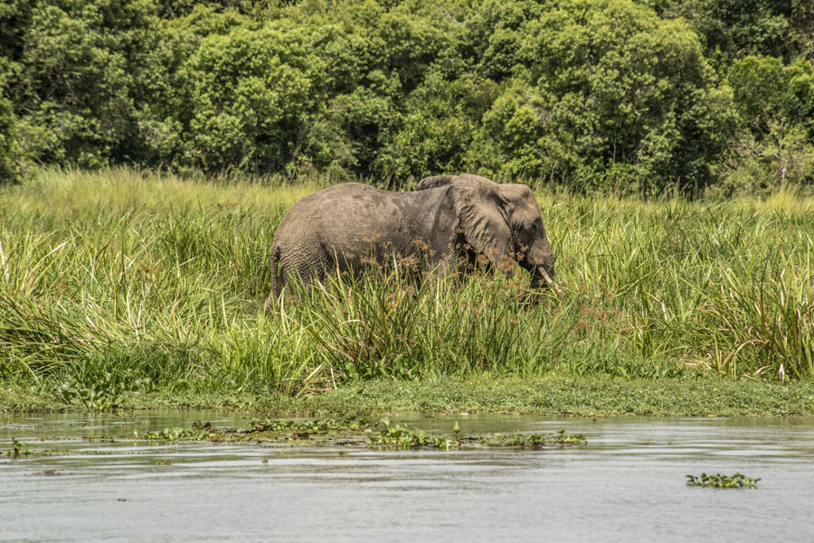 murchison-falls-uganda (250)