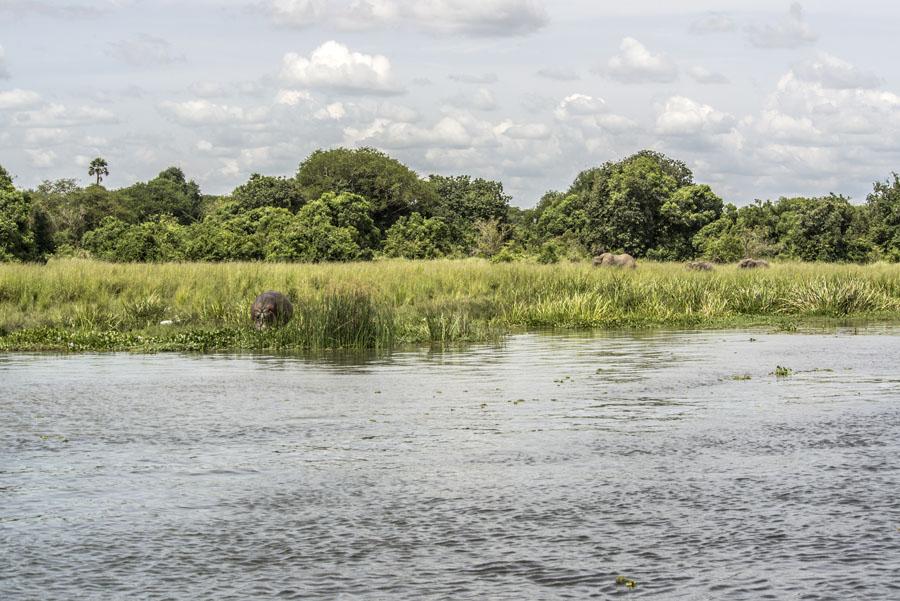 murchison-falls-uganda (251)