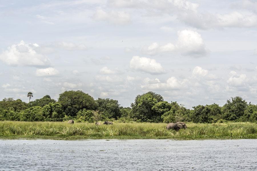 murchison-falls-uganda (252)