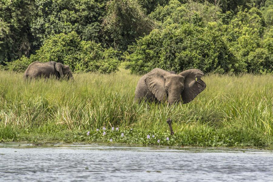 murchison-falls-uganda (253)