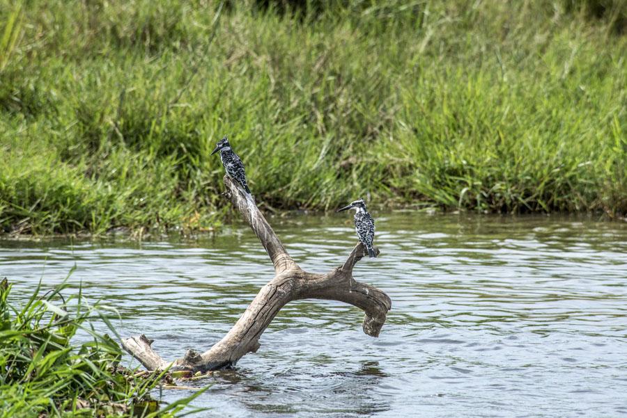 murchison-falls-uganda (259)
