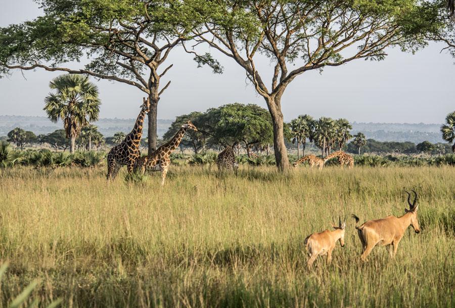 murchison-falls-uganda (26)