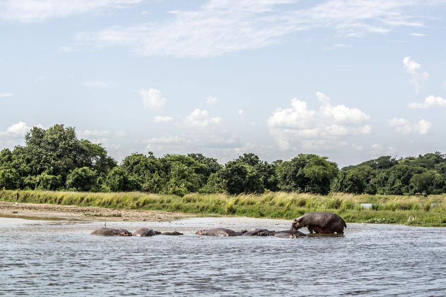 murchison-falls-uganda (261)