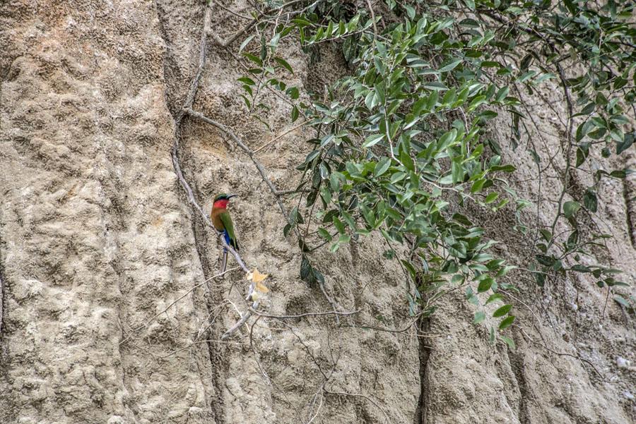 murchison-falls-uganda (265)