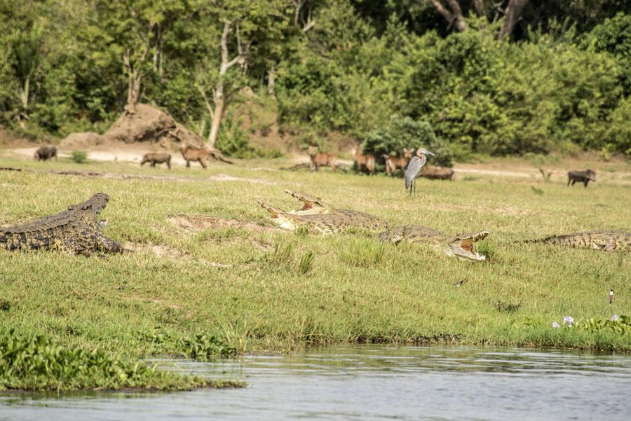 murchison-falls-uganda (269)