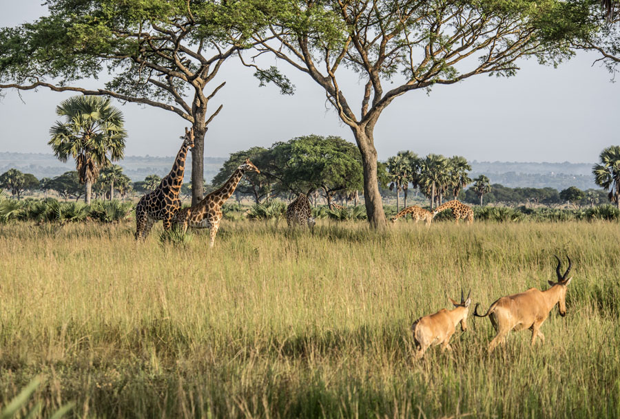 murchison-falls-uganda (27)