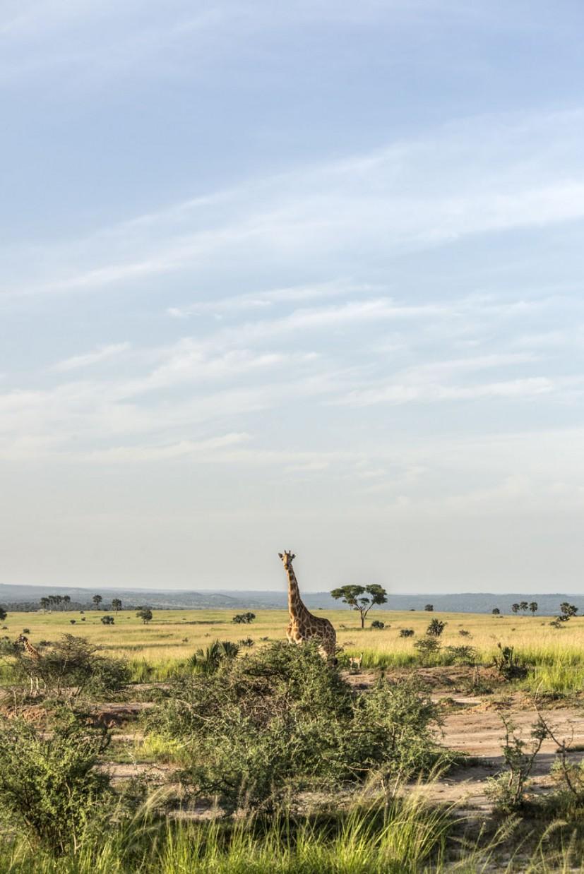 murchison-falls-uganda (285)