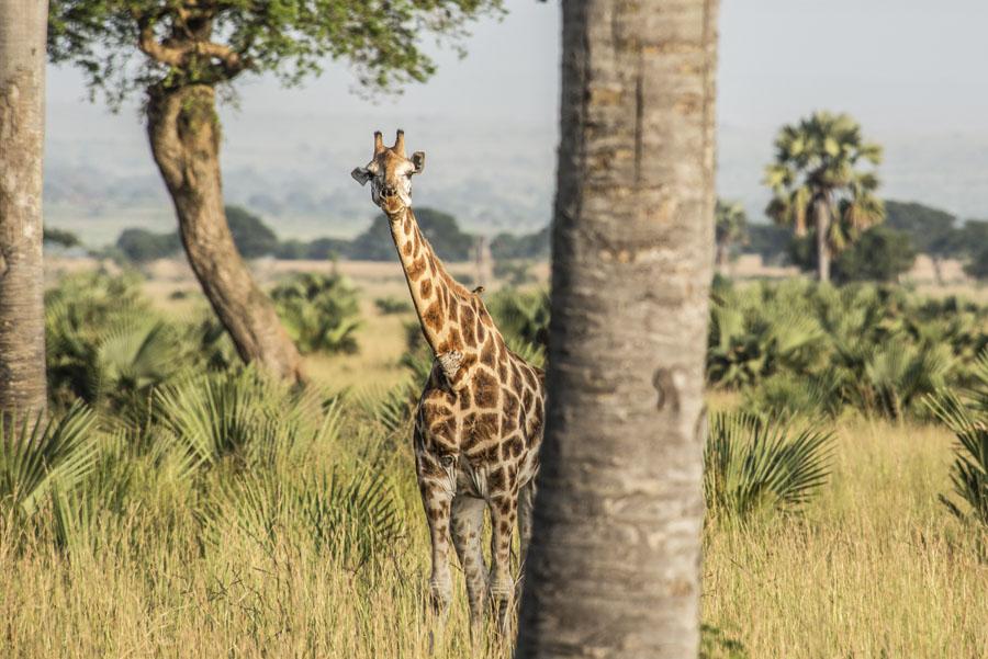 murchison-falls-uganda (29)