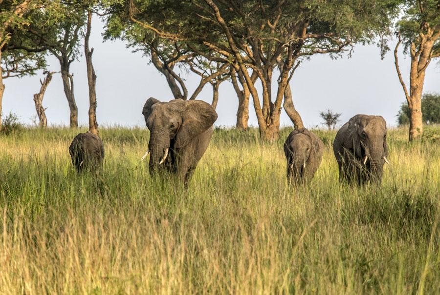 murchison-falls-uganda (290)