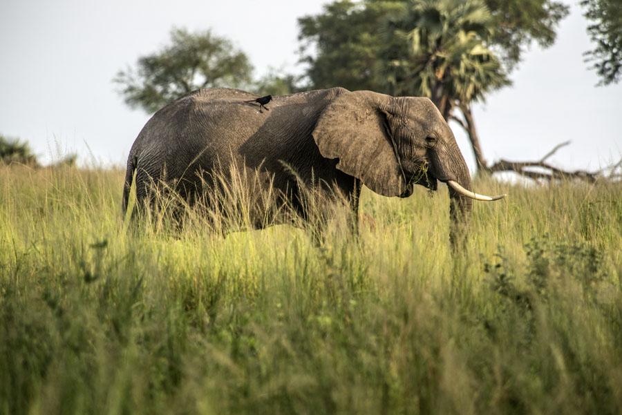 murchison-falls-uganda (291)