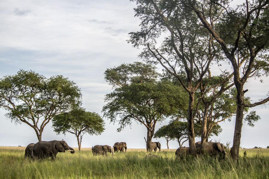 murchison-falls-uganda (292)