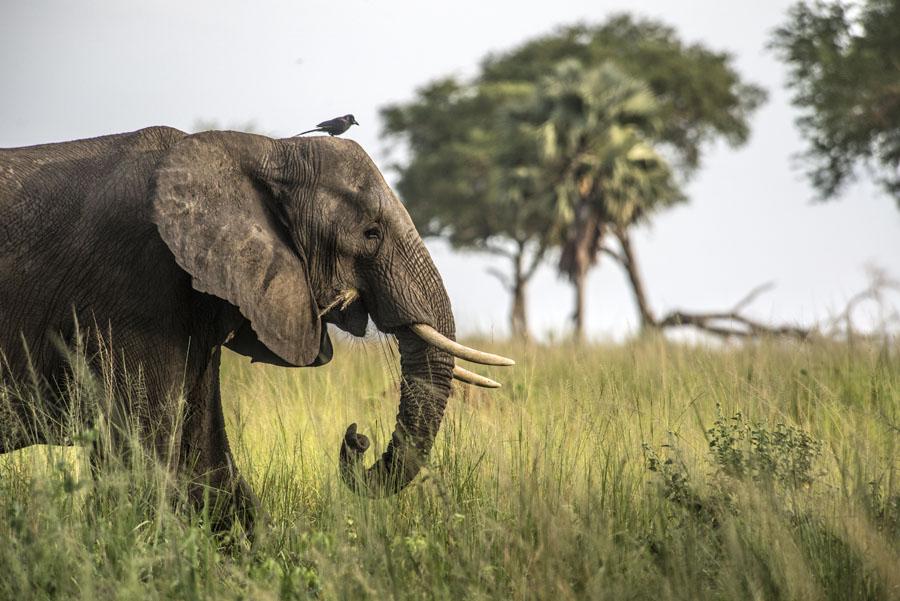 murchison-falls-uganda (293)