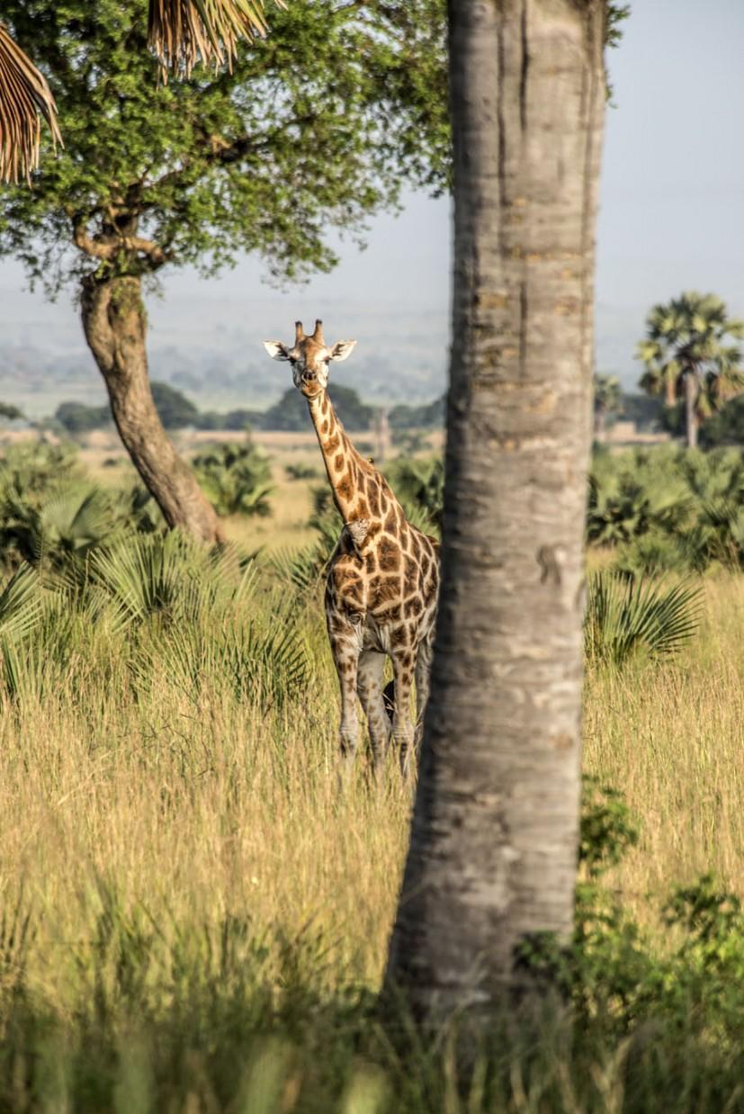 murchison-falls-uganda (30)