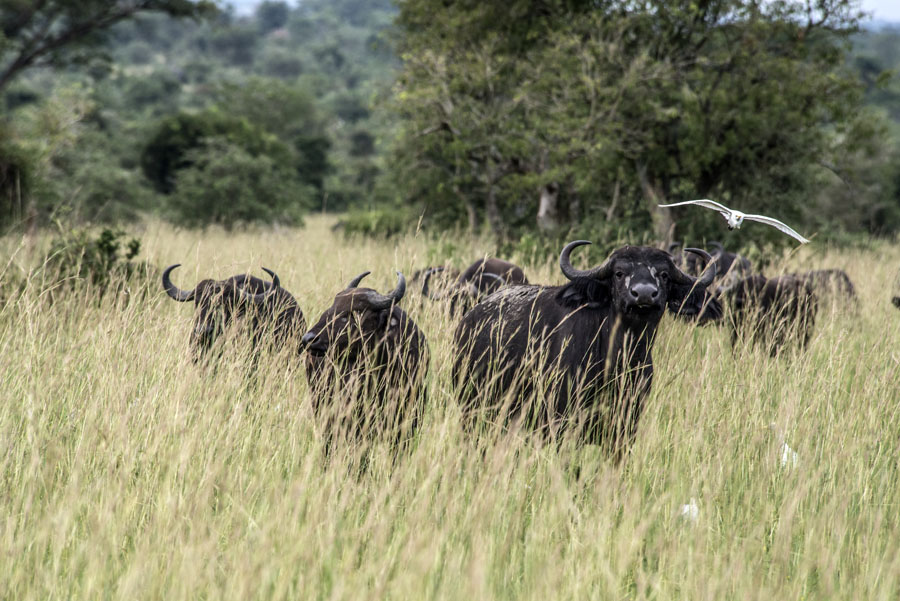 murchison-falls-uganda (304)