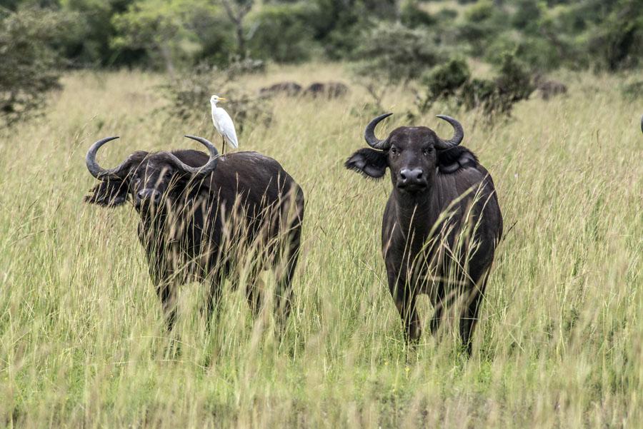 murchison-falls-uganda (305)