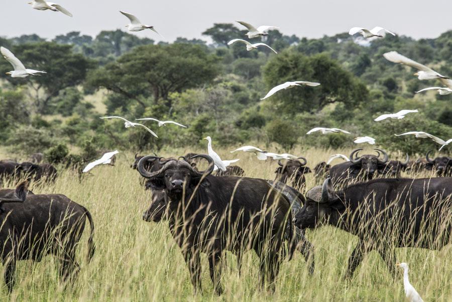 murchison-falls-uganda (307)