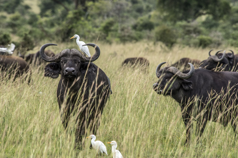 murchison-falls-uganda (308)