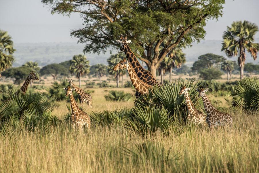 murchison-falls-uganda (31)