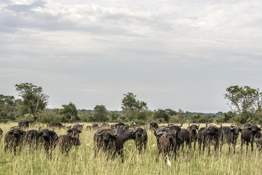 murchison-falls-uganda (310)