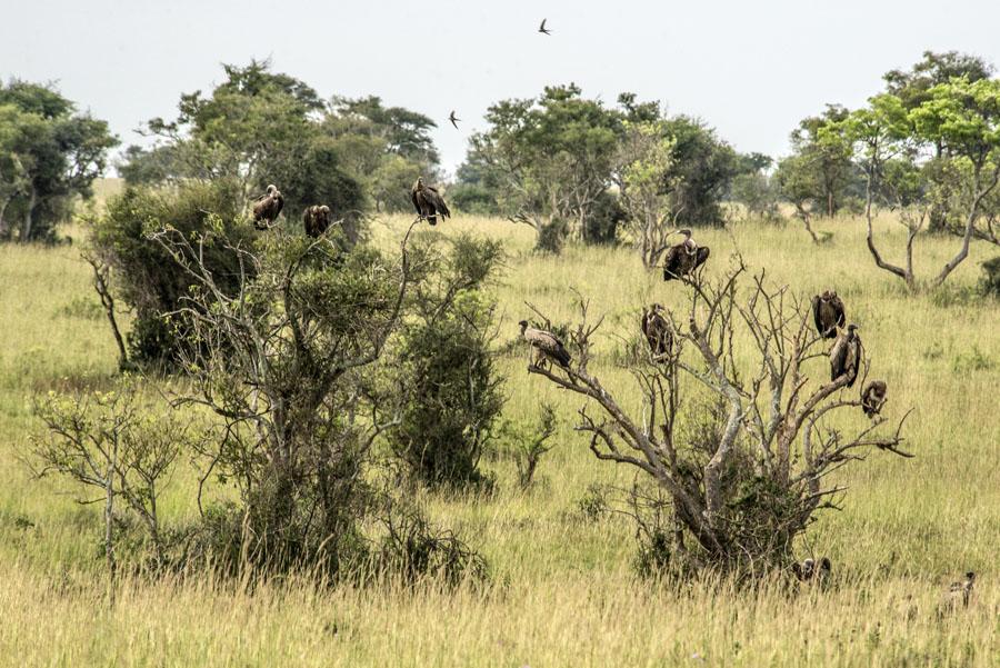 murchison-falls-uganda (313)