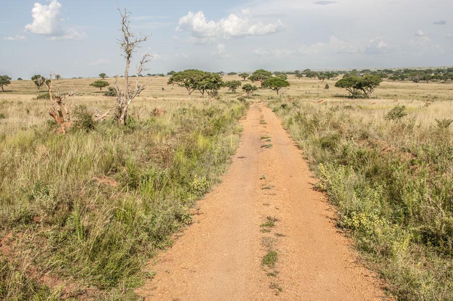 murchison-falls-uganda (328)