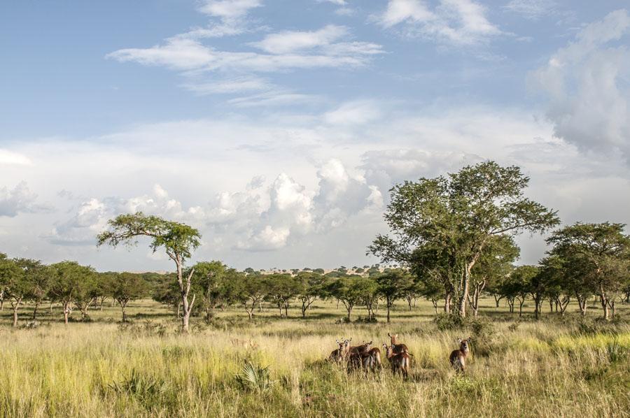 murchison-falls-uganda (334)