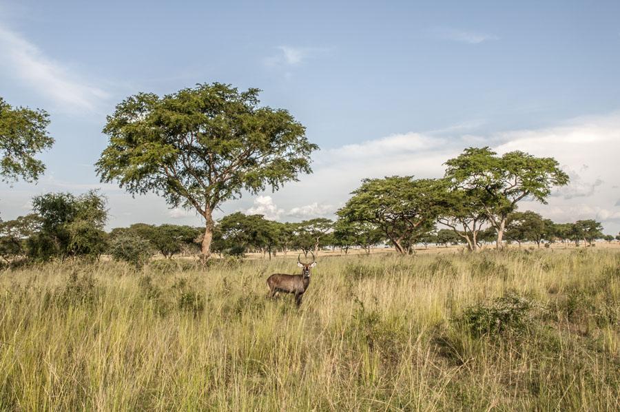 murchison-falls-uganda (335)