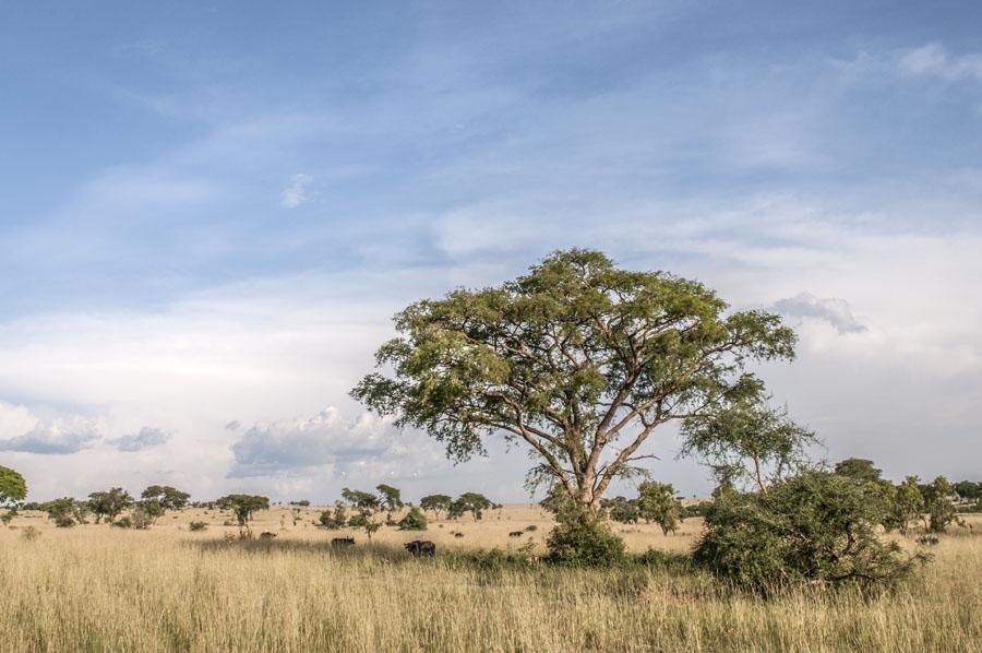 murchison-falls-uganda (336)