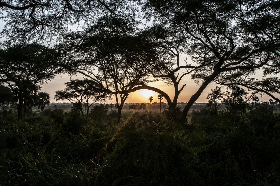 murchison-falls-uganda (337)