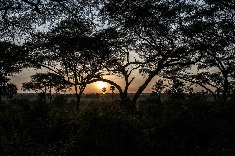 murchison-falls-uganda (338)