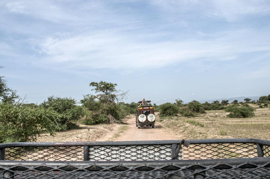 murchison-falls-uganda (348)