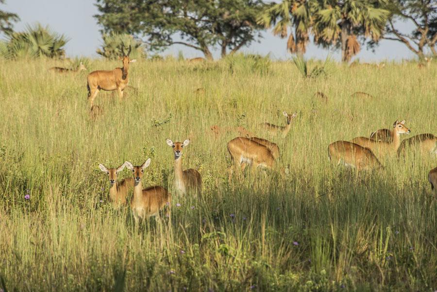 murchison-falls-uganda (39)